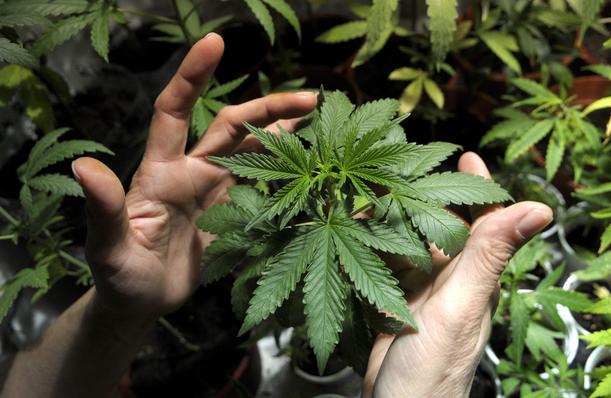 Tomás Aramayo sobre la ley de cannabis y el caso Landgren